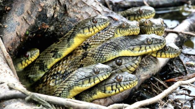Giải mã bí mật mơ thấy rắn - Liệu nằm mơ thấy rắn là điềm lành hay hung ?