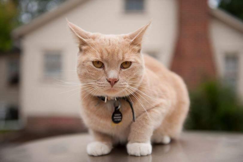 Nằm Mơ Thấy Mèo Là Điềm Báo Gì? Giải Mã Giấc Mơ Thấy Mèo Và Con Số May Mắn  Là Số Nào?
