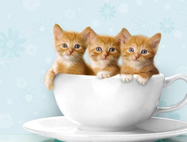 Nằm Mơ Thấy Mèo Vàng Đánh Con Gì? Giải Mã Giấc Mơ Thấy Mèo Vàng?